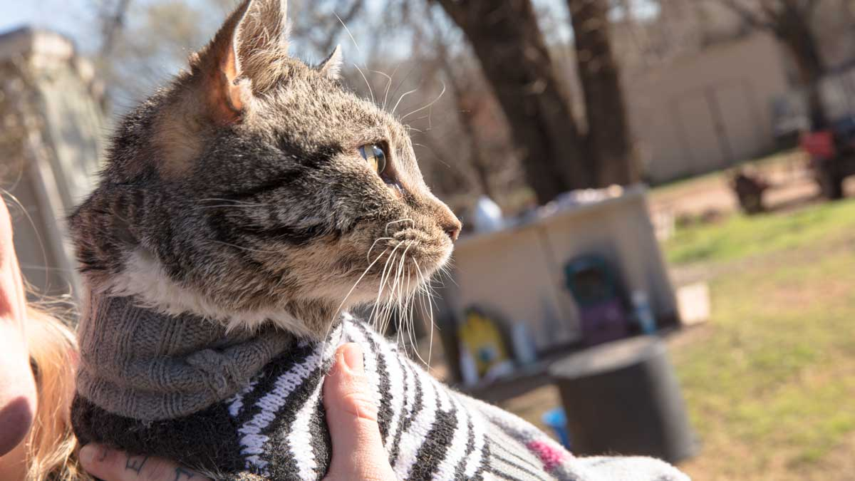 """A cat is held at Free To Live Animal Shelter (Photo: <a href=""""https://edmondbusiness.com/author/brent-fuchs/"""">Brent Fuchs</a>)"""